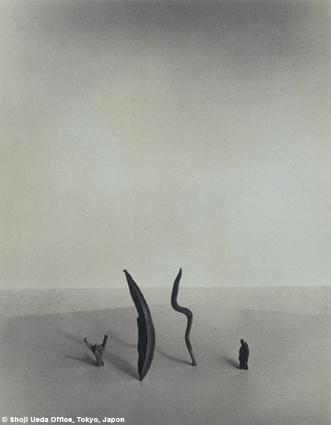 Petits naufragés, 1950